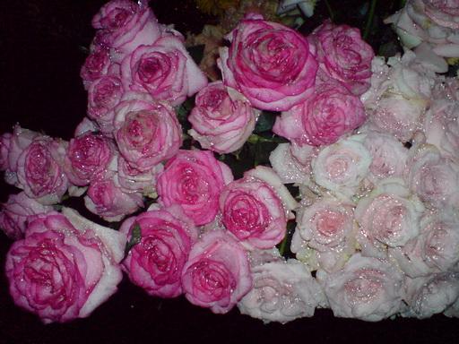 Mawar Pink Bertotol yang Indah, Dua Tangkai 5000