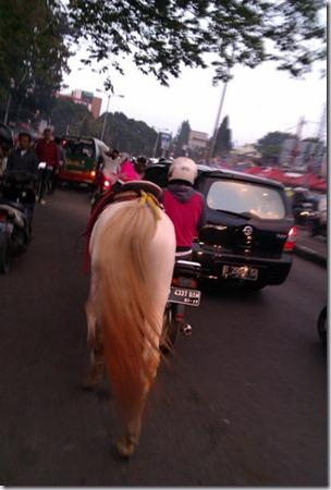 Kuda di Tepi Jalan