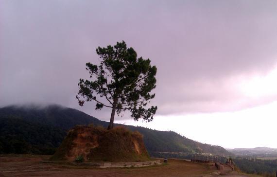 Bukit Satu Pohon