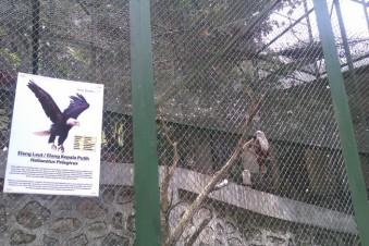 Burung dikerangkeng