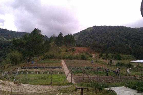Kebun di belakang
