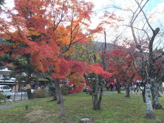 Daun Merah di Taman