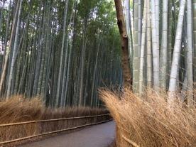 Pagar hutan yg juga dari bambu (cabang kecilnya)