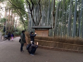 Ujung jalan setapak hutam bambu