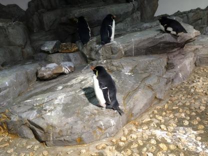 Penguin Pemalas