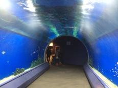 Terowongan menuju akuarium utama