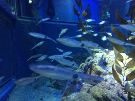 Ikan imut