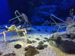 Kepiting, bukan laba-laba