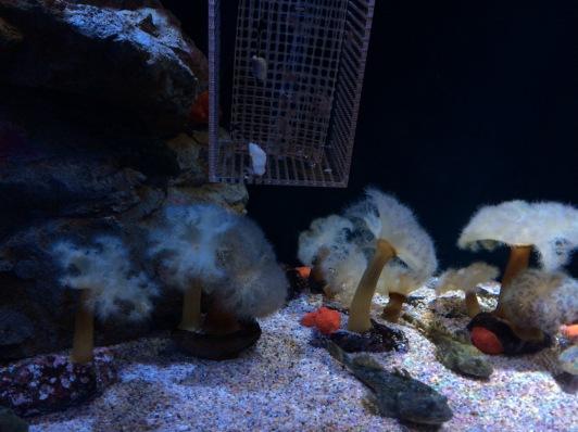 Tumbuhan laut yg bukan Plantae