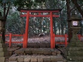 Rusa di bawah torii