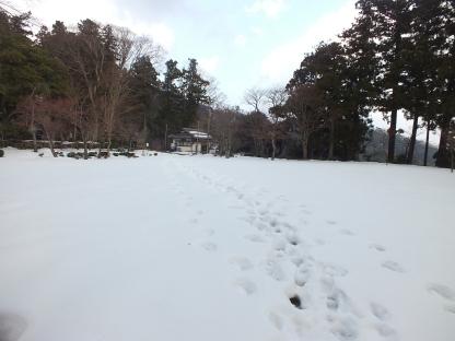 Salju di dekat pagoda (1)