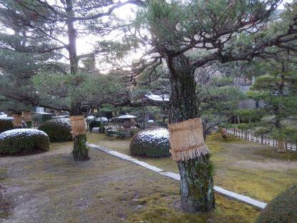 Shukkeien - Pohon Bersarung